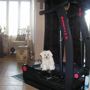 workin out with bella