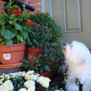 Mollie takes time to smell the flowers