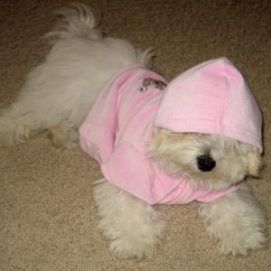 Lexi's new hoodie.