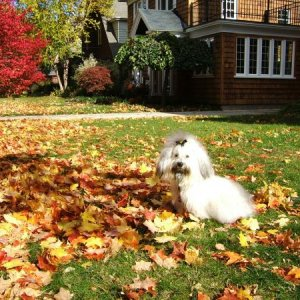 Mommy needs to rake these leaves!