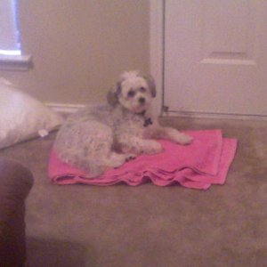 I put the towel by the door because it was raining outside and it quickly became Lucky's favorite spot.