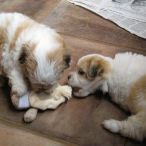 Atticus (Left) and Bro 5 Weeks 2009 07 23