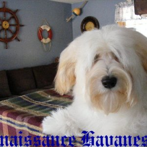 Happy Paws This Justin At Renaissance Call name: Justin Happy paws certainly fits, he loves to get your attention!