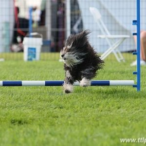 Bella jumping at Nationials