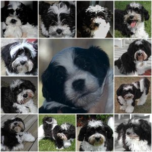 Dexter Mosaic  (A Year in Pictures) Jan 2010