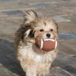 Comet playing football