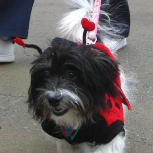 Gracie in the costume parade