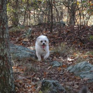 Button loves to run in the woods. Fall 2010