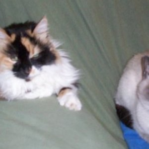 In Loving Memory Fuzzy- 18 yrs Sampson- 14 yrs  You are always remembered in my heart.  Izzy was named after Fuzzy:)