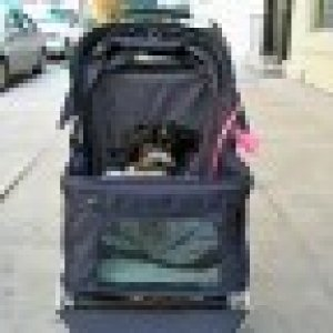 Gracie touring Manhattan in her very own stroller!