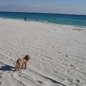Sadie on the beach in Destin, FL
