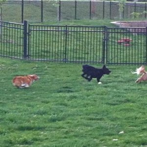 Fastest doggie in the doggie park!